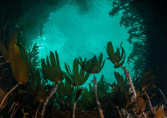 Take a virtual dive...to discover an underwater world of wonder like this kelp forest, captured by George Stoyle to help launch Scottish Natural Heritage's new online guide.