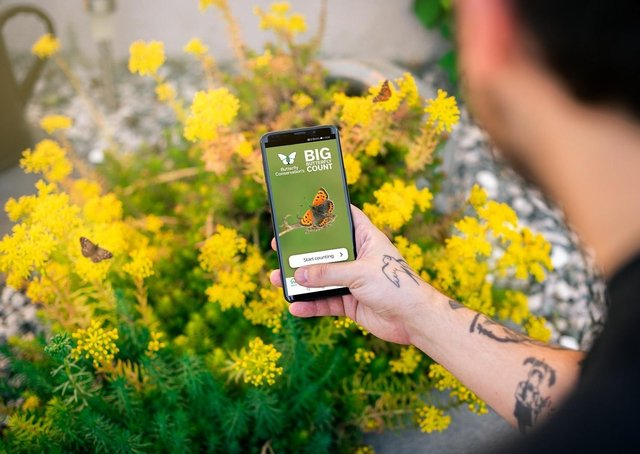 People are asked to spend 15 minutes in an outdoor space counting the amount and type of butterflies they see.