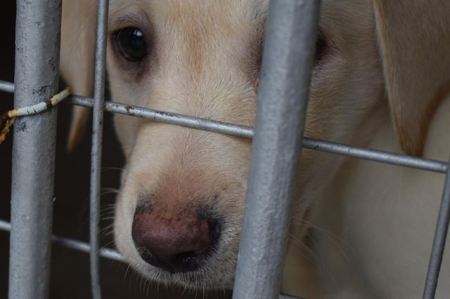 More than 100 puppies have been seized over the last two years after being smuggled throughCairyan port
