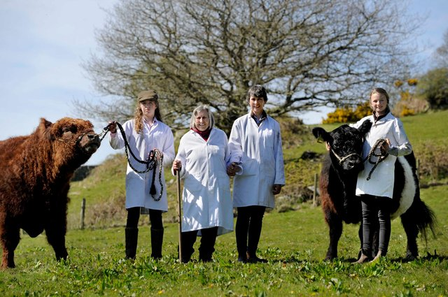 Three generations of the Bell family have the 'Beltie' breeding bug. Pic: Colin Hattersley Photography